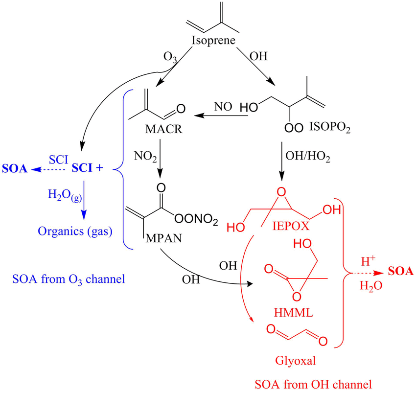 Mechanisms-for-SOA-formation-from-the-O3-and-OH-oxidation-channels-of-isoprene.png